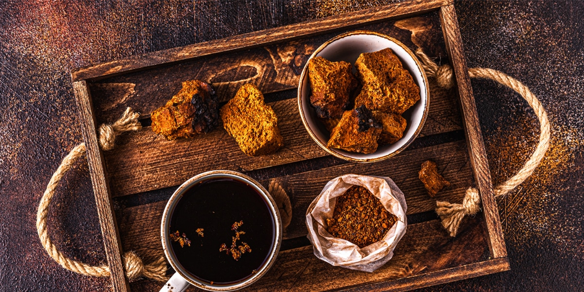 Chaga for stress and anxiety