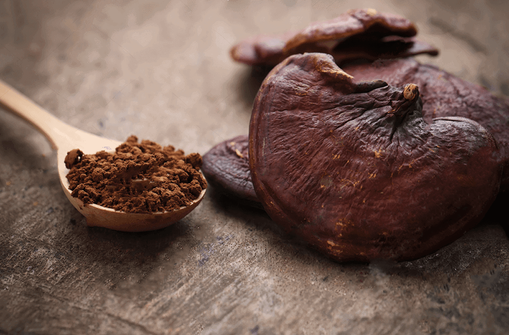 reishi for stress and anxiety